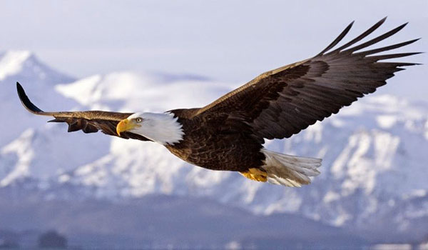 6 nguyên tắc sống kiêu hãnh của đại bàng